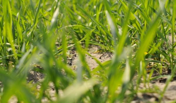 Ubezpieczenia upraw rolnych i zwierząt gospodarskich w 2019 r.